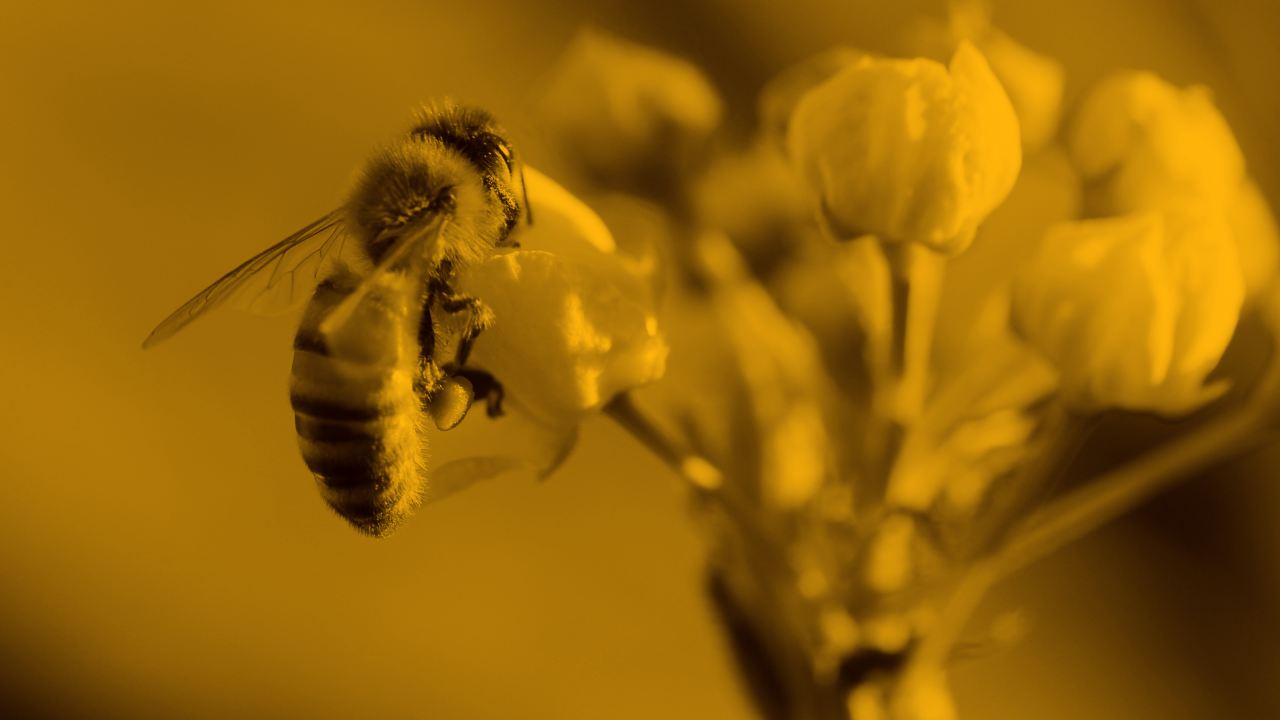 Bee: a collaborative work platform for small teams.